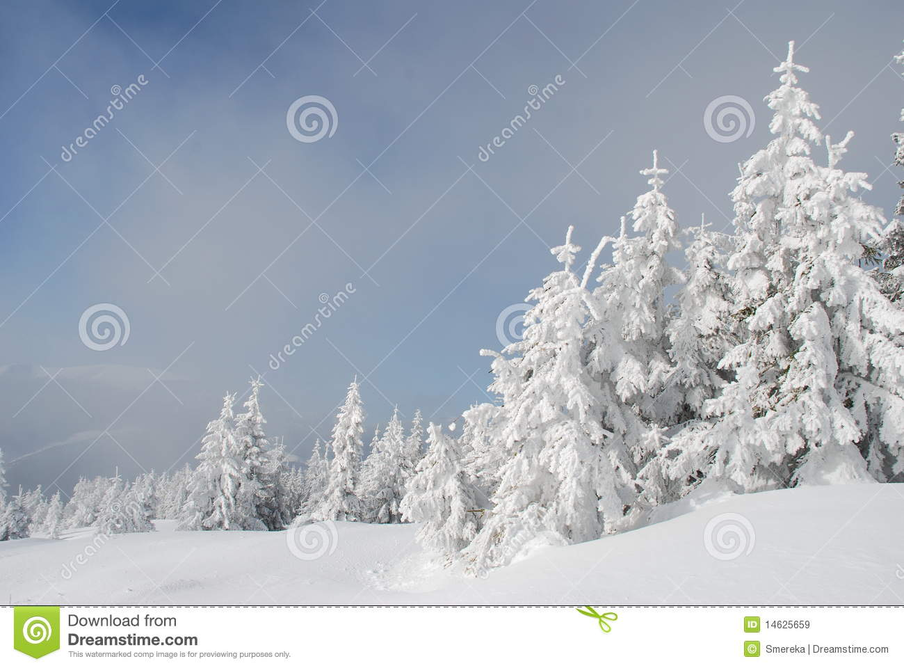 White Winter Fur trees On A Hillside Royalty Free Stock ImagesImage 1708