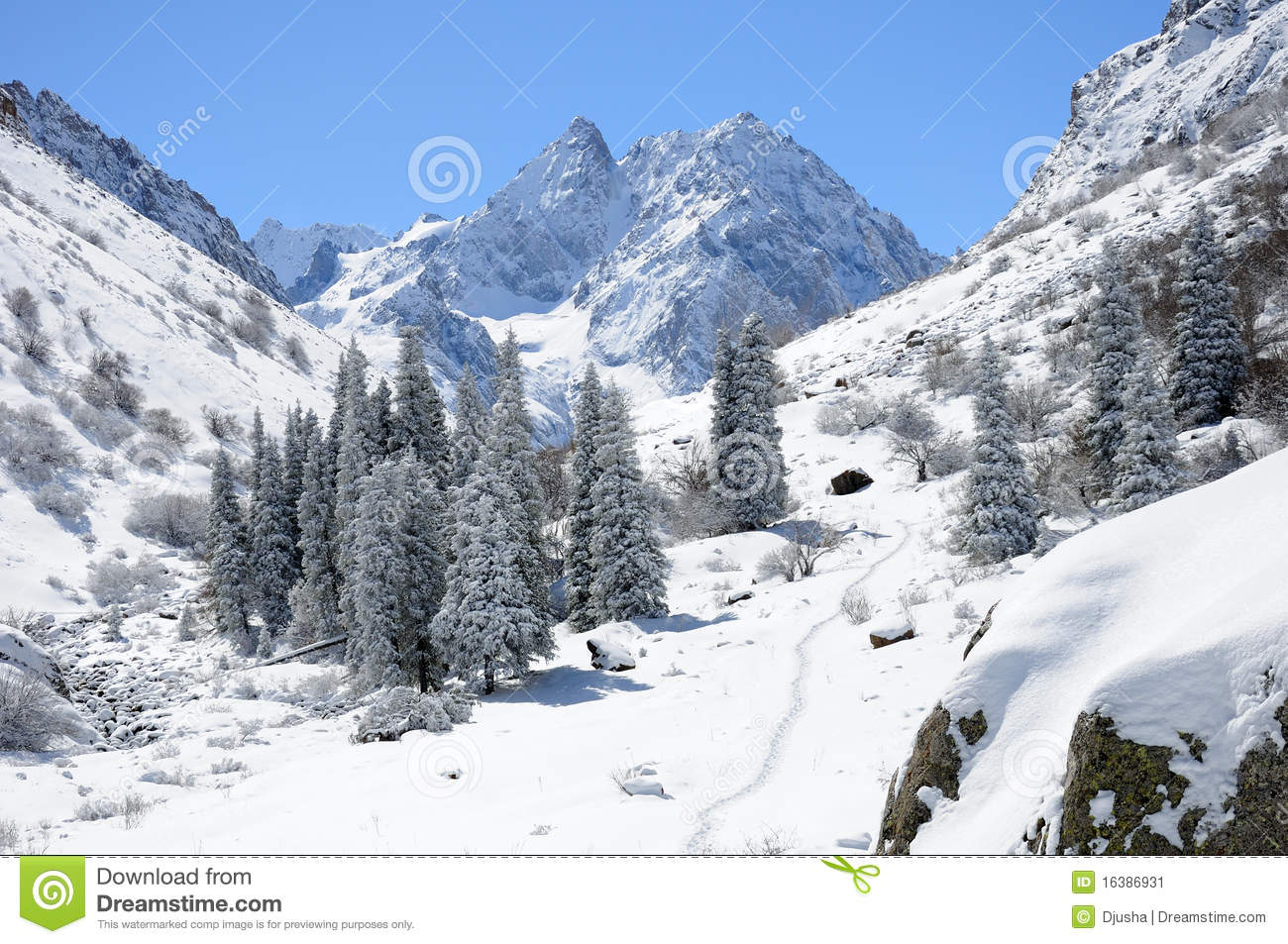 Winter in Ala Archa National Park with Mountains and firtrees in the 1631