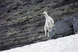 13 Jumping Animals, Just in Time for Leap Year 348