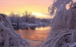 golden sunset in snowy forest wallpaper 5380e73c7c388 jpg 1635