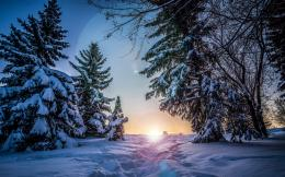 To Sunset In Snowy Forest wallpapers   Path To Sunset In Snowy Forest 1487