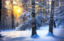 snowy forest, sunset in forest 150223 jpg 1191