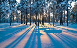 Wallpaper winter, snow, sunset, tree, forest desktop wallpaper 844