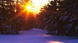Sunset over snowy forest wallpaper #16329 590