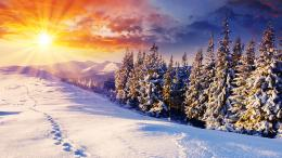 Sunset Snowy Forest Information 1554