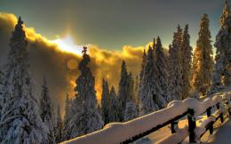 Picture, Sunset, winter, sun, snow, forest 1121