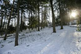 Snowy forest before sunset by ViRALY on deviantART 1424