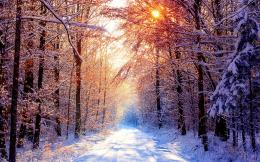 Sunset in snow forest « Free wallpapers 2560x1600 download desktop 430
