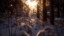 Sunset in the snow covered forest wallpapers and imageswallpapers 746