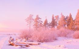 Pink sunset light over snowy forest HD Wallpaper 1920x1080 Pink sunset 298