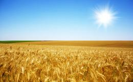 wallpapers harvest of golden wheat fields wallpaper 3 fields of gold 1488