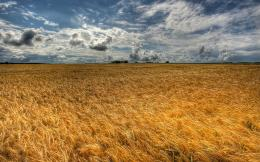 HomeWallpapersPhotographsNatureEternal golden wheat field 291