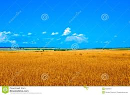 Golden Wheat Field Stock PhotoImage: 38929437 1874