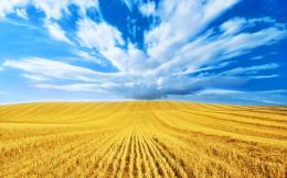 golden harvest blue clouds gold wheat field golden wheat field 1955
