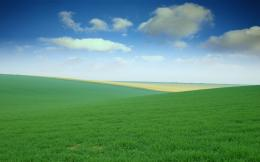 1920x1200 Green Field desktop PC and Mac wallpaper 1237