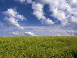 1600x1200 Green Field desktop PC and Mac wallpaper 1603