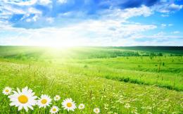 green landscapes flowers daisy green field bright HD Wallpapers jpg 643