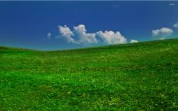 Green field wallpaperNature wallpapers#1651 589