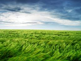 Wallpaper – Green Field | SysadminRay 1024