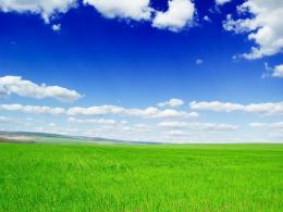 Green Field Background Wallpaper | Purple Wallpaper 1053