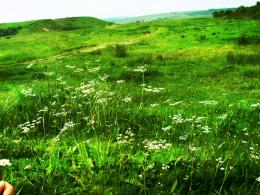 green field v1 by lorylinn stock on DeviantArt 592