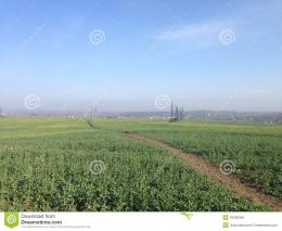 Green Field Stock PhotoImage: 43566045 376