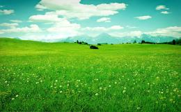 Green FieldWallpaper #32954 1818