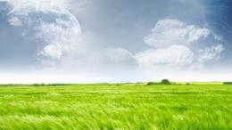 Green field wallpaper #12376 1516