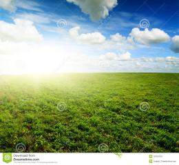 Green Field Under Midday Sun Stock PhotosImage: 16764763 877