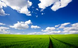 Green Field HD Wallpaper | Wallpup com 1421