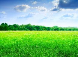 green field wallpaper click right and save as to download green field 1543