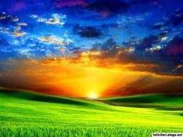 Green Field With Sunset 474