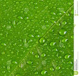 Water Drops On Green Leaf Macro Royalty Free Stock ImagesImage 1145