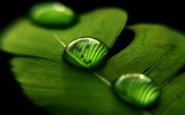 Green Nature Close up Leaves Water Drops Macro Wallpaper 551