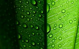 leaf, leaf, leaves, drops, drop, dew, water, green, green, green macro 143