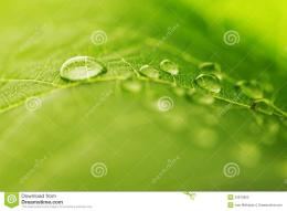 Water Drop On Green Leaf Stock PhotoImage: 33675800 1274