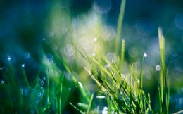 Green nature grass heaven bokeh water drops macro wallpaper background 734