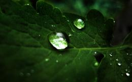 Green Nature Leaves Water Drops Macro Dew Wallpaper 879