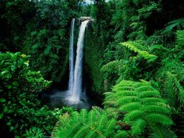 Green Forest With Waterfalls HD wallpapersGreen Forest With 1202