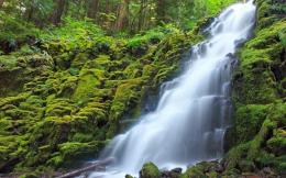 green, forest, waterfalls | Free HD wallpapers 1327