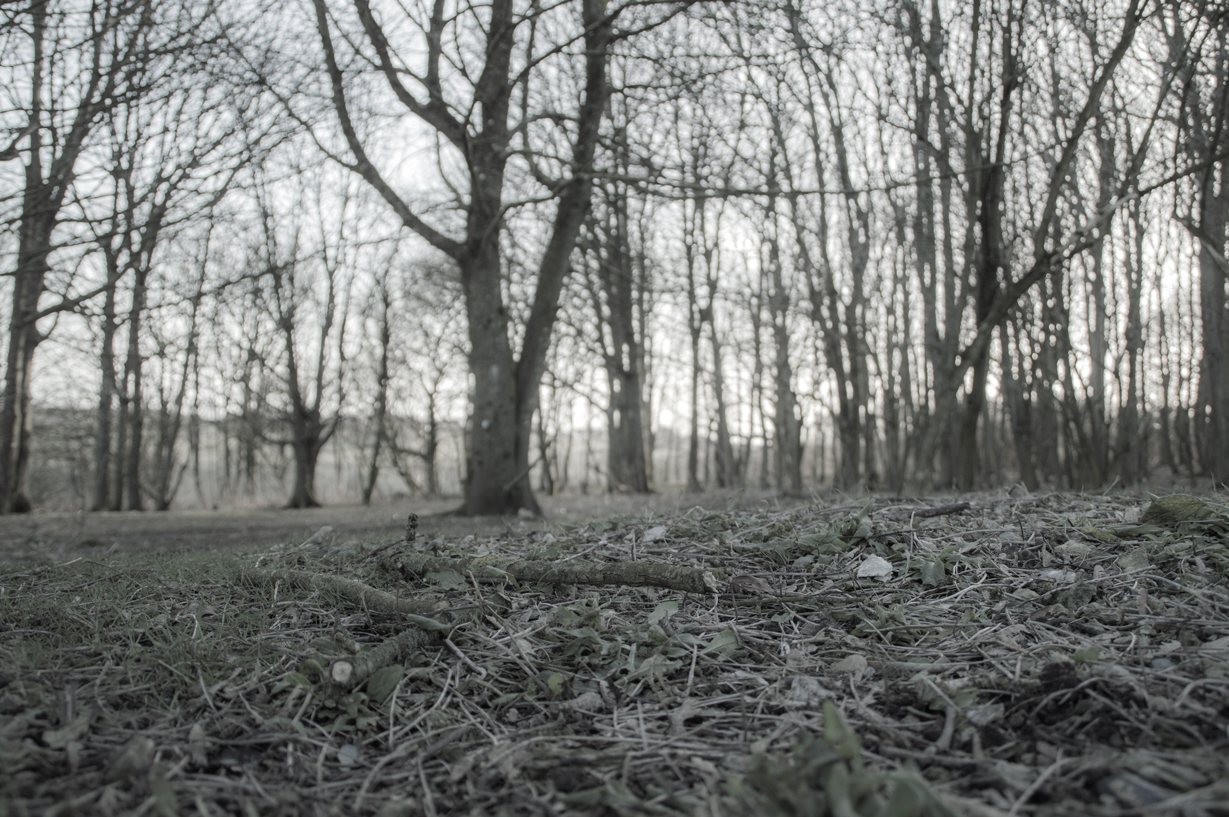 Grey forest | 1075