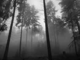 Dark Forest Wallpaper 2592x1944 Dark, Forest, Grayscale, Monochrome 1397