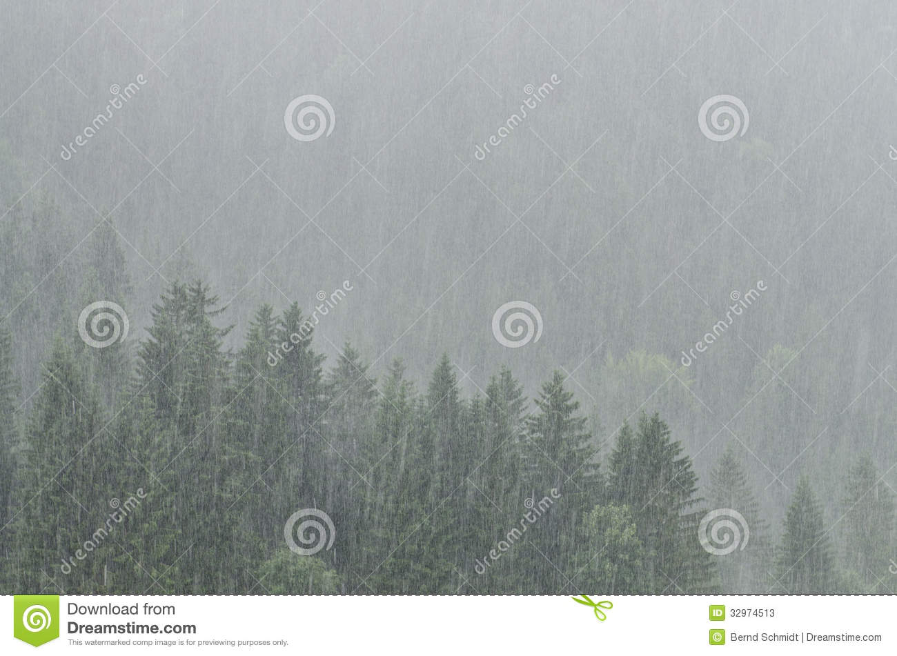Grey forest with trees in fierce rain shower 1137