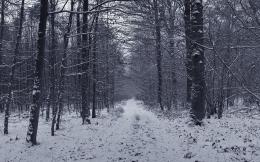 Snowy grey forest firs black white path wallpaper 1070