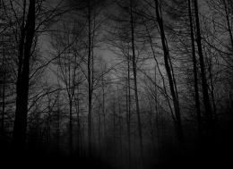 Depressive Forest Black Grey Dark Night hd wallpaper #194565 1528