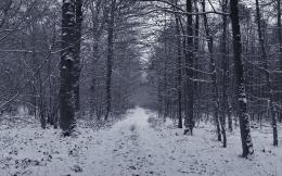 Snowy Grey Forest Firs Black White Path hd wallpaper #1620651 1935