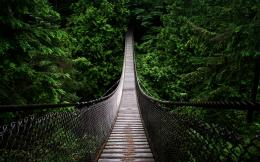 Hanging bridge in the forest wallpaper1149461 1124