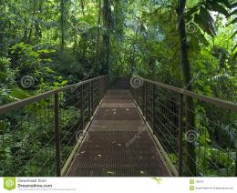 Jungle Trail Stock ImageImage: 189781 866