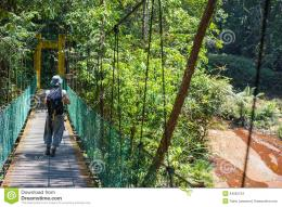 Woman hiker crossing hanging bridge in the thick jungle of Lambir 1706