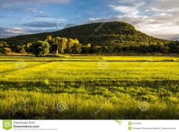 Landscape of rice field and mountain in countryside of Thailand 1070